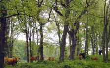 El bosc de Casanova en perfecte estat de salut